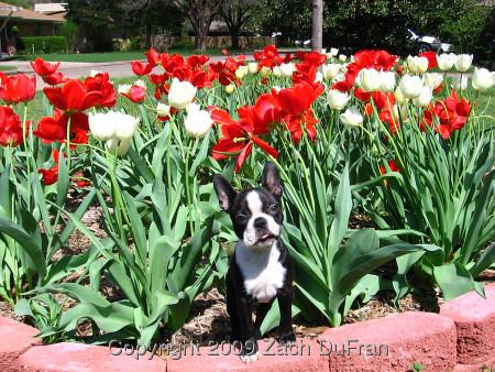 pw_tulip_bed