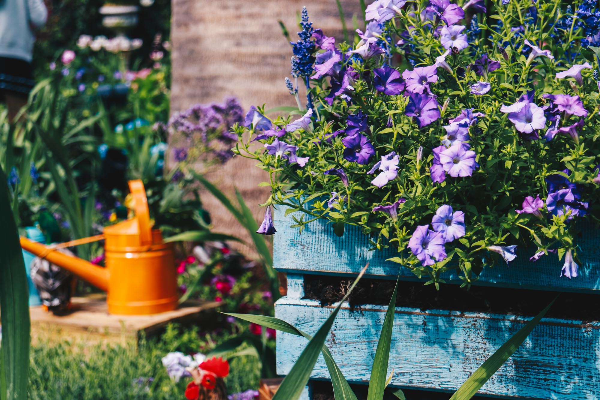 Blue-beauties-floral-display-gardensbythebay-darrenbloggie14