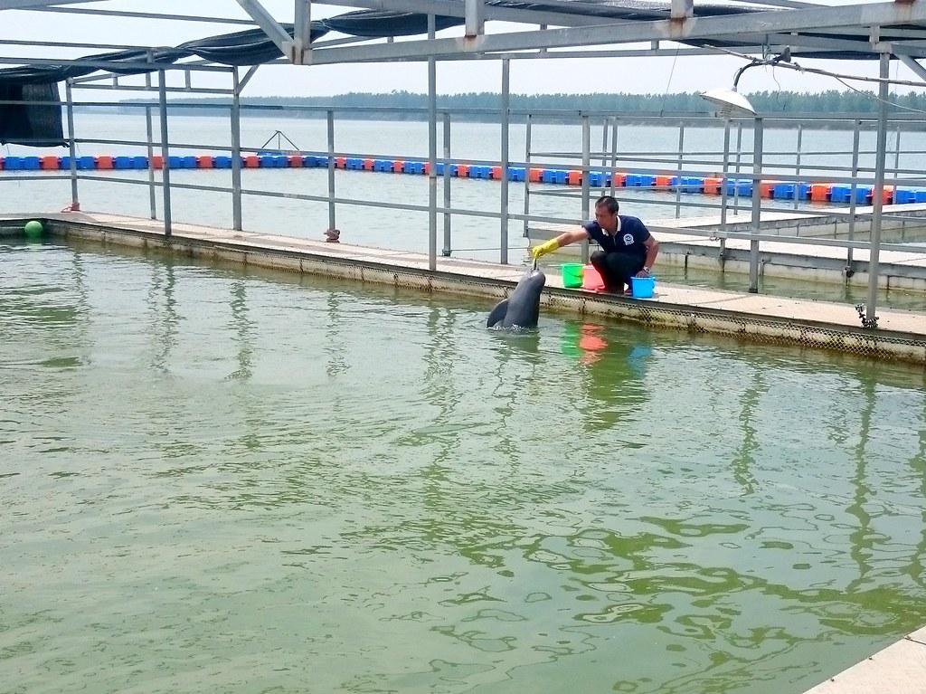 天鵝洲保護區的江豚飼育員丁澤良。
