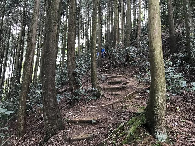 烏帽子岳 細野ルート 登山道