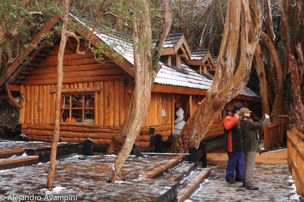 Cada de Te en el Bosque de Arrayanes en la Peninsula de Quetri-Hue