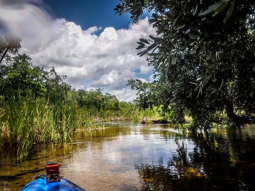 Juniper Springs Creek-140