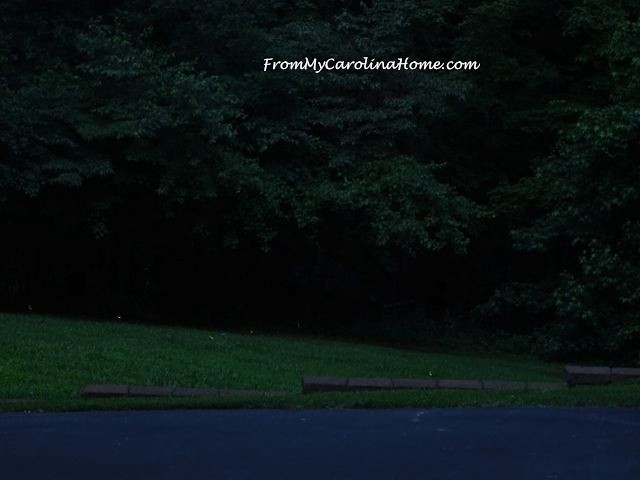 Fireflies at From My Carolina Home