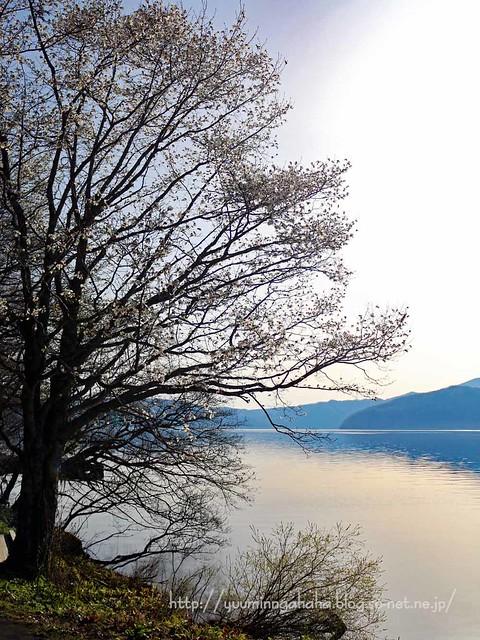十和田湖早朝