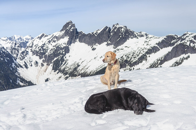 Summit dogs on Damnation Peak