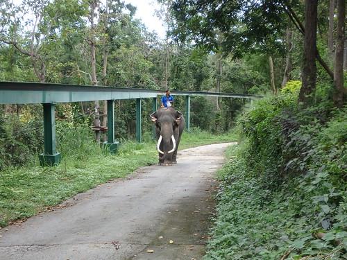 chiang-mai-zoo-21