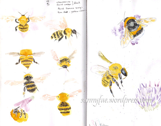 bumble-bee-sketches-4