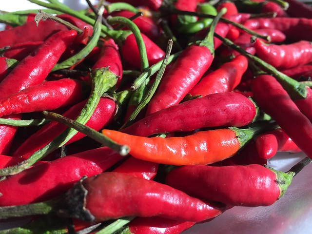 Red Chile - Mexico