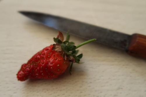 Erste Erdbeere von unserer rosa blühenden Erdbeerpflanze