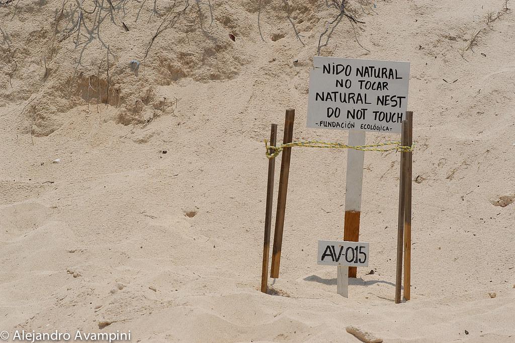 Nido de tortuga en la Playa cercana a Akumal en la Riviera Maya