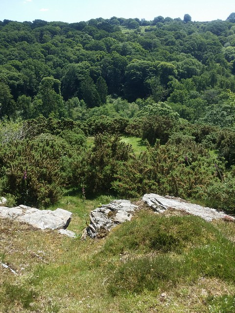 View from Raven Rock (Walkham) top