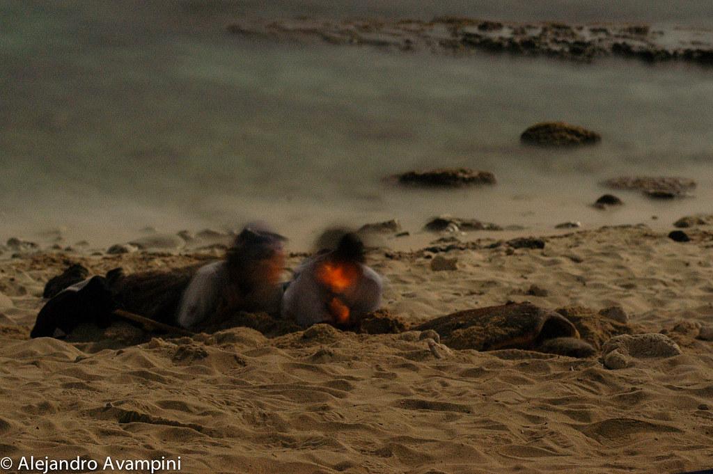 2 Integrantes de la Fundación Ecológica supervisando el desove de una tortuga caguama