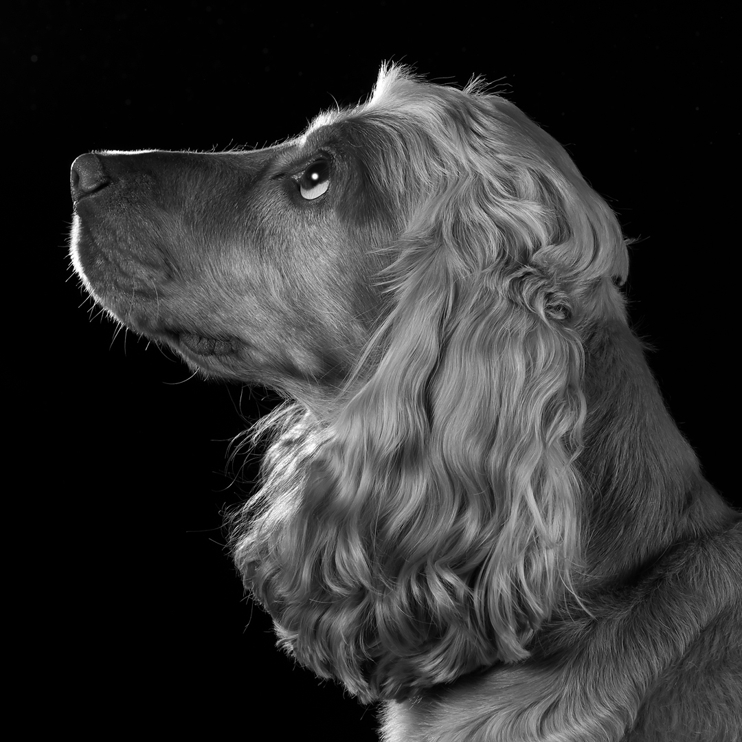 black and white profile portrait with rim lighting