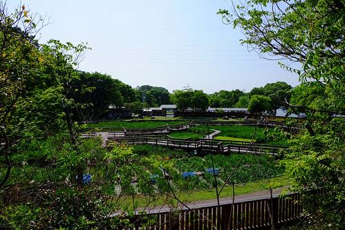 2017.05.14 山田池公園 花菖蒲園