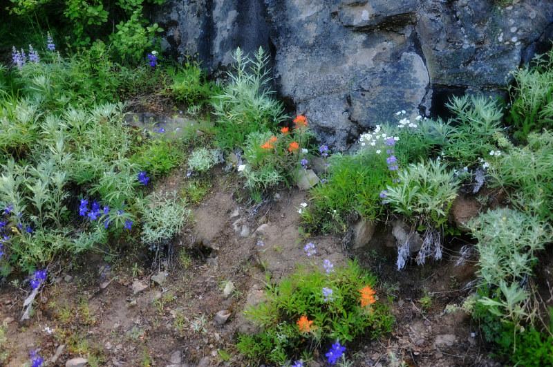 Iron Mountain Hike Wildflowers @ Mt. Hope Chronicles