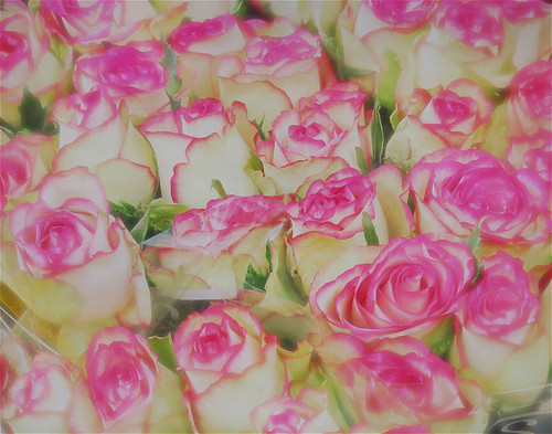 Pink-tinged roses for sale in Utrecht, Holland