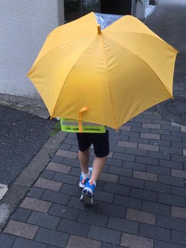 新しい傘で投稿するとらちゃん 2017.5.25