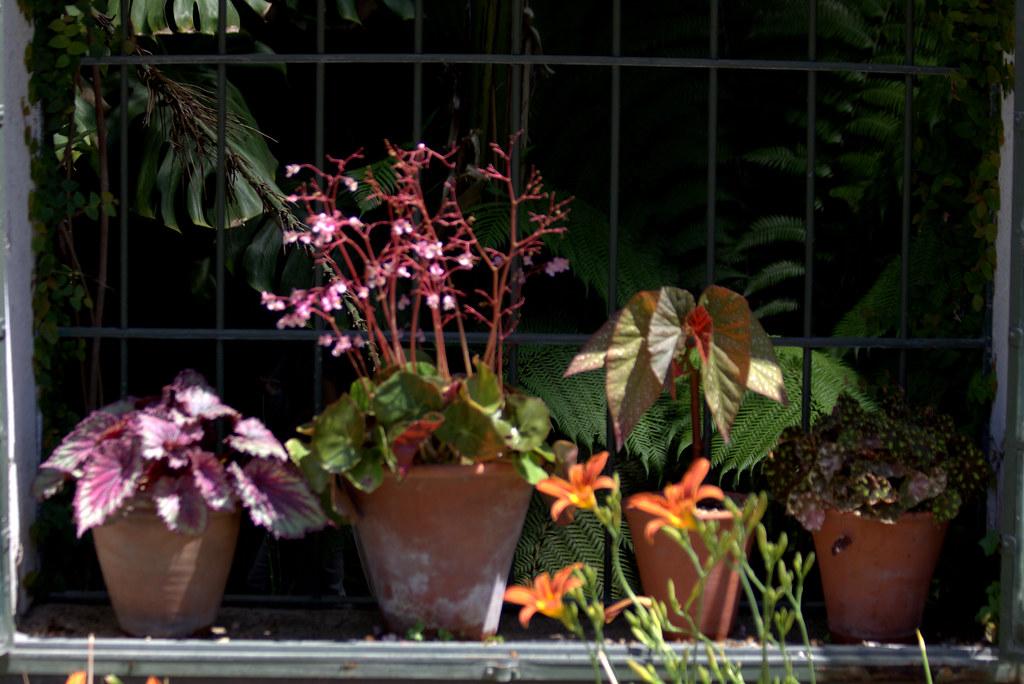 Soleando plantas