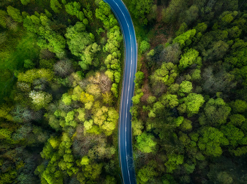 road forest | by ALFONSO1979 