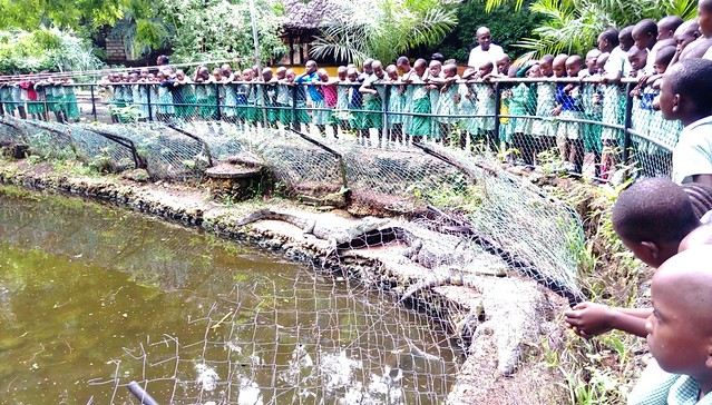 All the pupils stared in wonder at the crocodiles