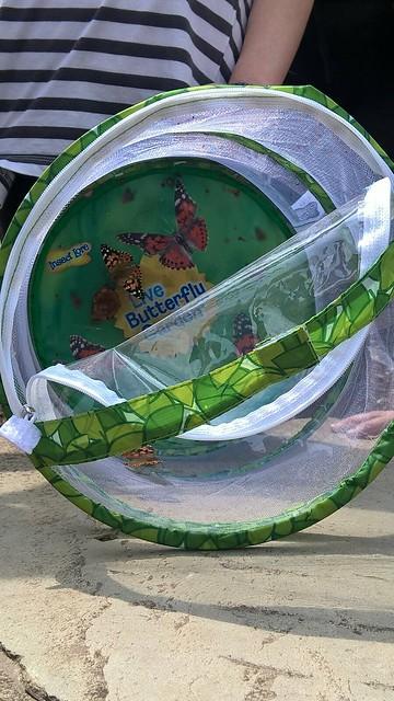 Projekt Insekten