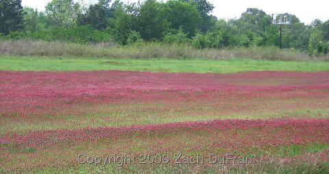 red_field