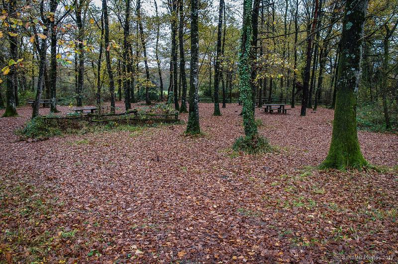 Zona de picnic del Bosque de Orgi