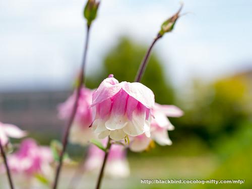 Flowers 20170511 #08