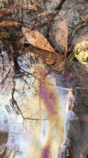 Oil Shatter Video