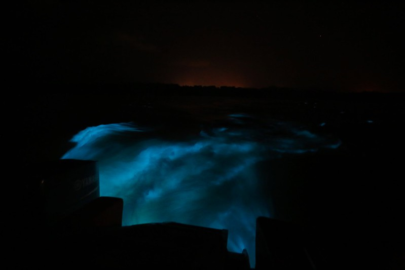 Luminous Lagoon in Jamaica