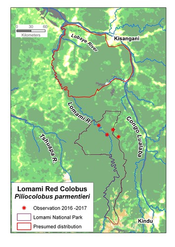 parmentieri in the Lomami National Park