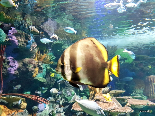 Fish at Ripley's Aquarium of Canada