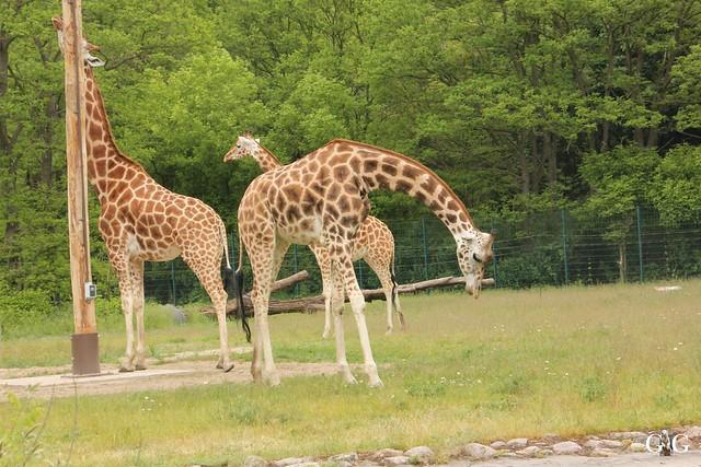 Tierpark Friedrichsfelde 25.05.1748