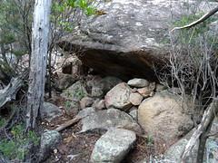 Petite sapara proche du chemin au départ près du pont de Figa