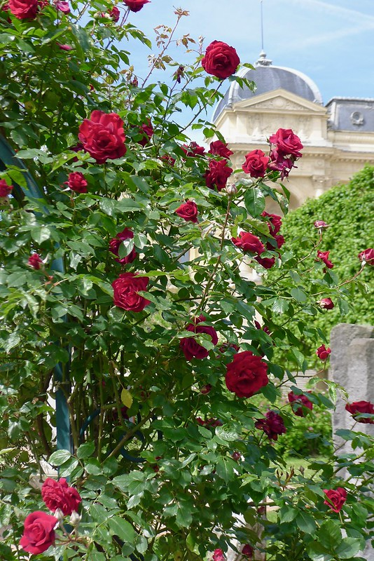 We visit the magical Jardin des Plantes