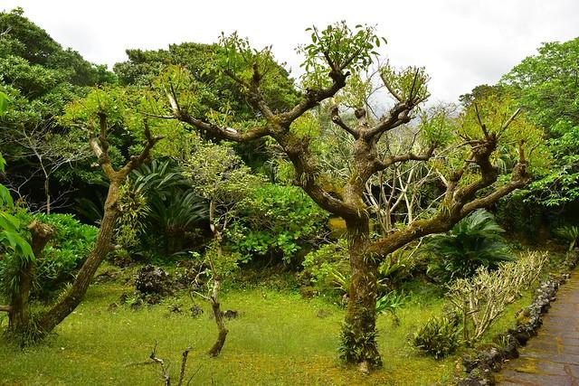 八丈島・八丈植物公園の園内散策路