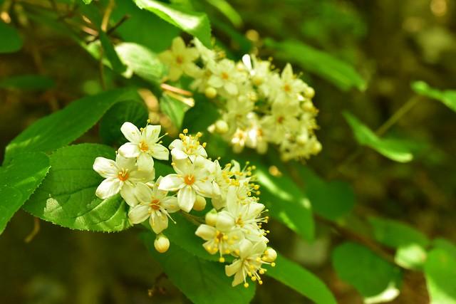 畦ヶ丸に咲いていた花