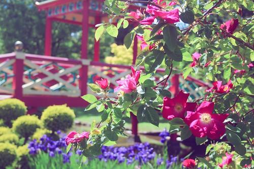 Jardin floral d'Apremont sur Allier (4)