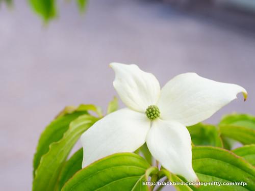 Flowers #05