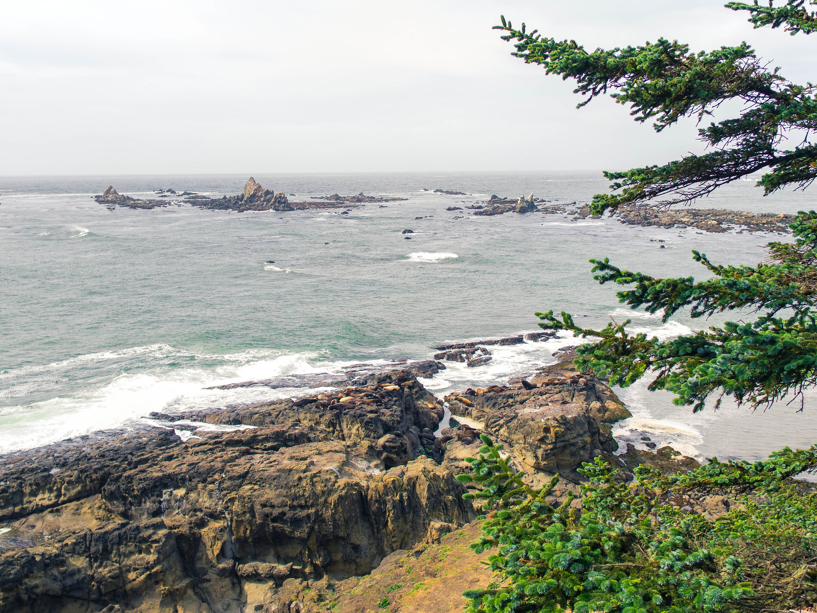 Oregon Coast-23