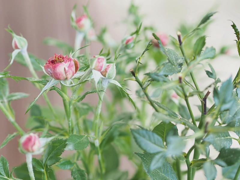 kukka-kesä-kukkia
