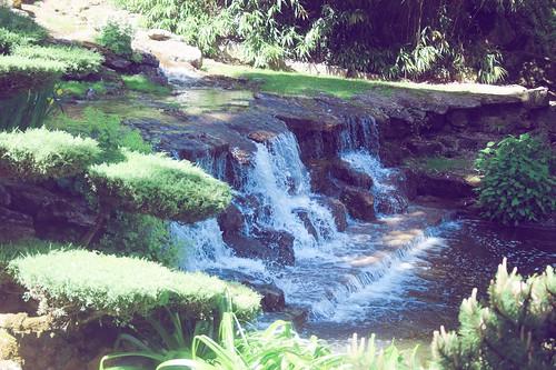 Jardin floral d'Apremont sur Allier (11)