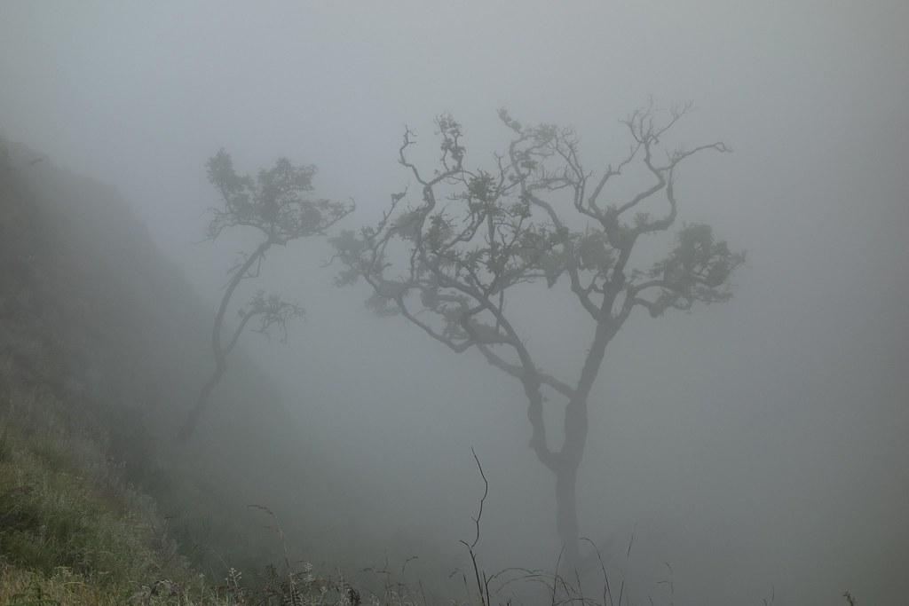 Rinjani - Jour 2 - Descente Cratere Tree