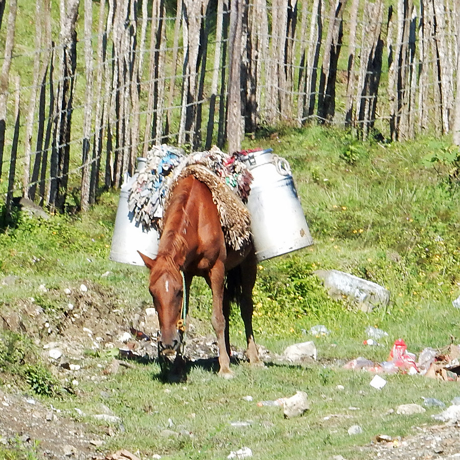 horse-milk