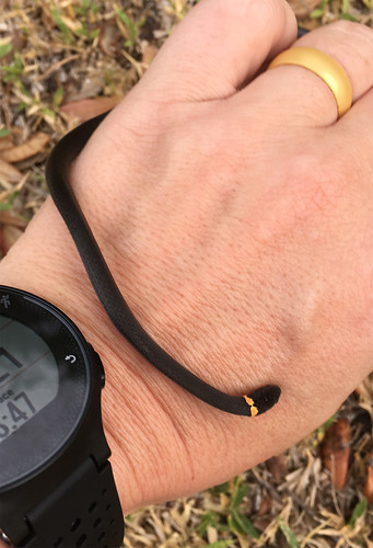 Ringneck Snake | by Powered By Birds