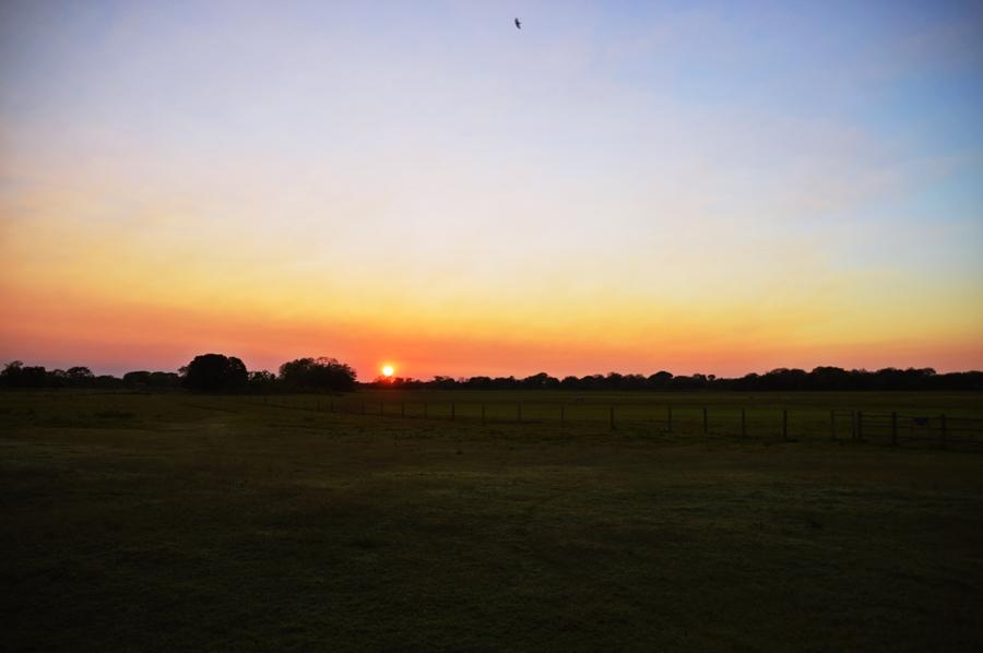 dawn15