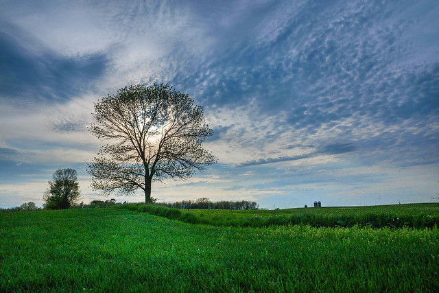 Tree, Sky, Farm Field, Rural, Blue, Green