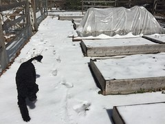 backyard garden 2017-04-02