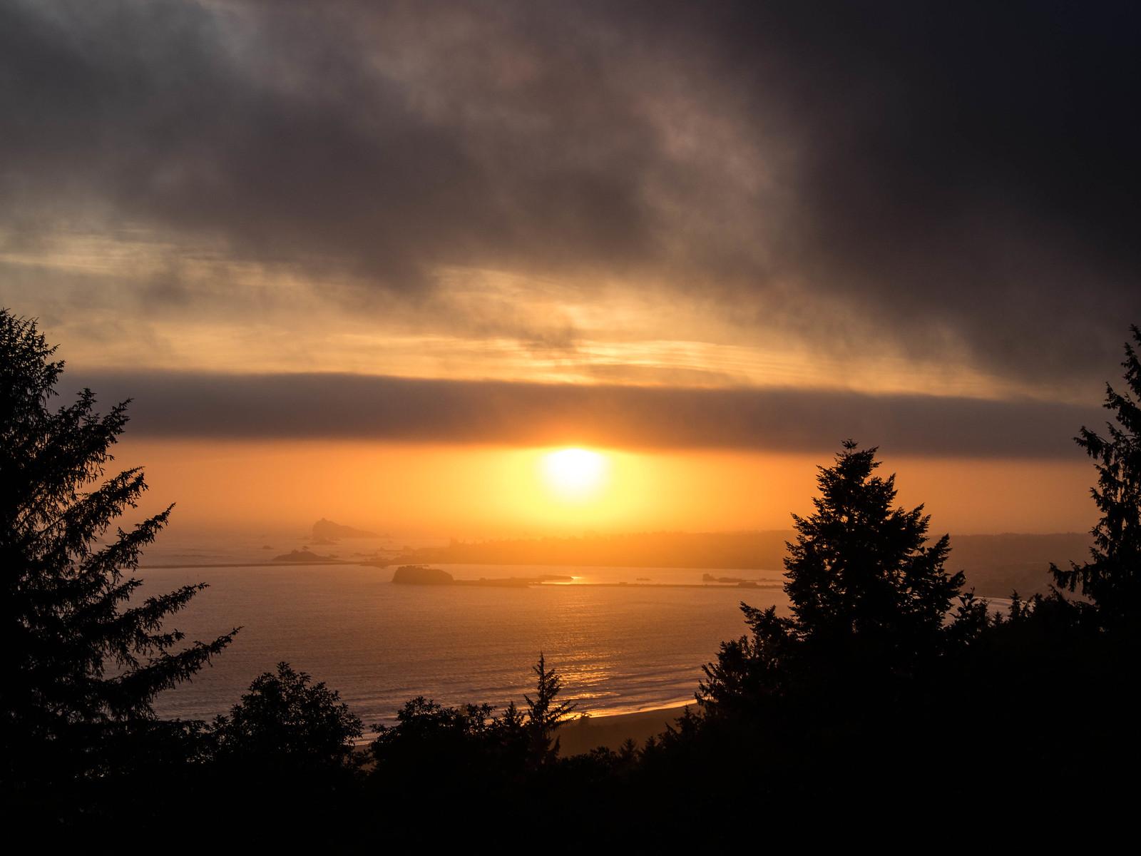 Redwoods-12