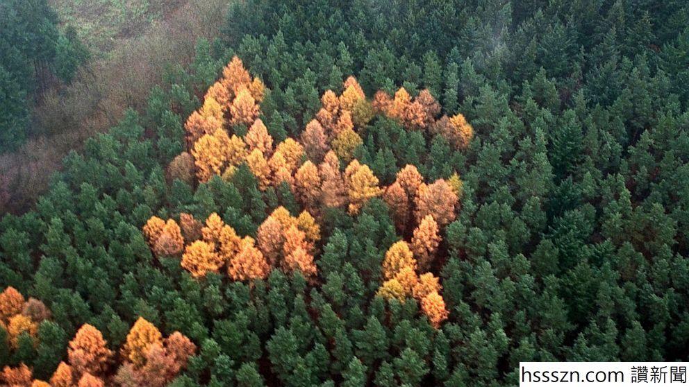 nc_swastika_forest_ll_130705_16x9_992_992_558
